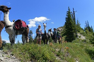 Swan Mountain Llama Treks : Let docile llamas carry your gear as you hike and explore wilderness around Swan Lake. Perfect for kids & families, we offer 2-hour, half-day, full-and multi-day treks.