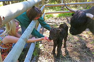 Bailey's Bedn' Bale - dog & horse friendly lodging