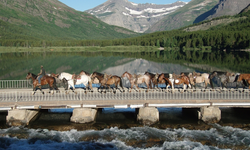 Horses are led over Waterfall Bridge in Many Glacier.