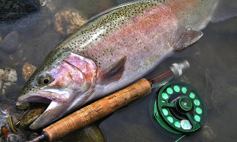 Gallatin Gateway Montana Baden Ranch Fishing
